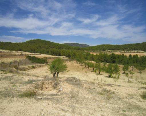 Plot - Resale - Bullas - Murcia
